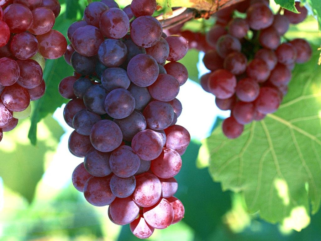Grape Remedy For Cancer: How Effective?